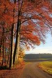 Carretera nacional en otoño Foto de archivo