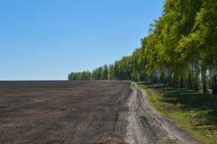Carretera nacional en un campo cerca del bosque en un día soleado Imagen de archivo libre de regalías