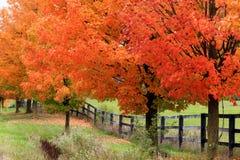 Carretera nacional hermosa en follaje del otoño Imagen de archivo libre de regalías