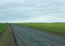 Carretera nacional a través de campos amarillos del canola Imagen de archivo libre de regalías