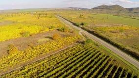 Carretera nacional a través de los viñedos en colores de la caída, visión aérea almacen de metraje de vídeo