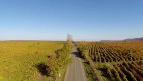 Carretera nacional a través de los viñedos en colores de la caída, visión aérea almacen de video