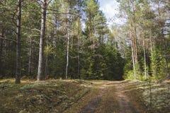 Carretera nacional a través de un bosque mezclado imagen de archivo