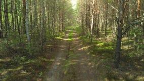 Carretera nacional a través del bosque almacen de metraje de vídeo