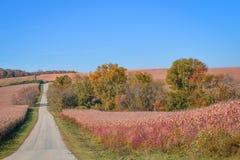 Carretera nacional a través del campo de maíz foto de archivo