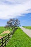 Carretera nacional y roble Foto de archivo libre de regalías