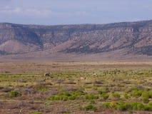 Carretera Route 66 del paisaje del desierto Fotografía de archivo