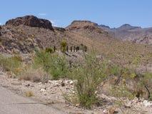 Carretera Route 66 del paisaje del desierto Imagen de archivo