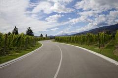 Carretera a través del viñedo Imagen de archivo libre de regalías