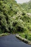 Carretera tropical Imagen de archivo libre de regalías