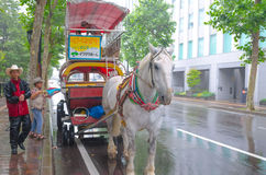 Carretero con el caballo blanco Fotos de archivo libres de regalías