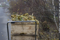 Carretilla con Autumn Leaves Fotografía de archivo libre de regalías