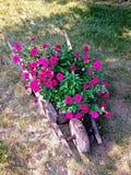 Carretilla con las flores Fotos de archivo libres de regalías