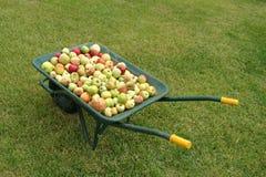 Carretilla con las manzanas en hierba Fotografía de archivo