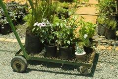 Carretilla con las plantas Foto de archivo