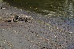 Carretilla descargada vieja del carro de la compra en el cauce del río durante la bajamar, cocinero River, Sydney, Australia foto de archivo libre de regalías
