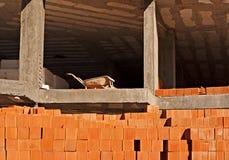 Carretilla en el 1r suelo en el edificio Imagen de archivo libre de regalías