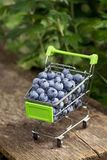 Carretilla para los productos del supermercado con los arándanos en el jardín en una tabla de madera fotografía de archivo