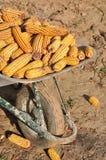 Carretilla y maíz Fotos de archivo libres de regalías