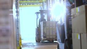 Carretillas elevadoras del trabajo en el almacén Carretilla elevadora con paseos de las cajas entre las filas en el almacén Inter almacen de video