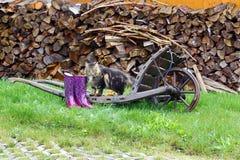 Carretillas viejas con las botas de goma, el gato y las manzanas Imágenes de archivo libres de regalías