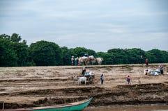 carretti Bue-disegnati sulle banche del fiume di Irrawaddy fotografia stock