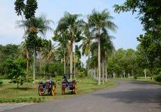 Carretti del cavallo che aspettano i passeggeri in Jogja, Indonesia Fotografie Stock