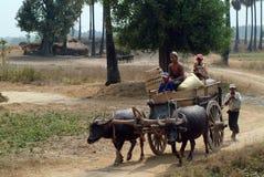 Carretti della Buffalo rimorchiati nel campo del Myanmar Immagini Stock Libere da Diritti