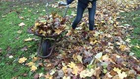 Carretto arrugginito del carico della ragazza della donna del giardiniere con le foglie nel giardino di autunno Tenuto in mano 4K video d archivio