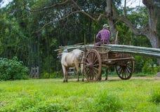 Carretto birmano del bue di guida dell'agricoltore Immagine Stock Libera da Diritti