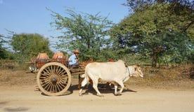Carretto birmano del bue di guida dell'uomo alla città antica in Bagan Immagini Stock Libere da Diritti