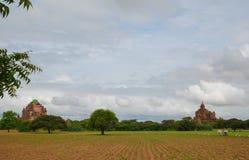 Carretto del bue che ara il solco in Bagan, Myanmar immagine stock libera da diritti