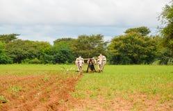 Carretto del bue che ara il solco in Bagan, Myanmar fotografia stock