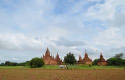 Carretto del bue che ara il solco in Bagan, Myanmar immagini stock