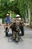 Carretto del bufalo di guida dell'agricoltore sulla strada campestre Immagine Stock