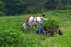 Carretto del cavallo dell'erba del taglio della riunione dell'uomo Immagini Stock Libere da Diritti