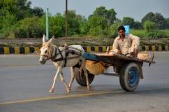 Carretto di asino con il driver sulla strada principale pakistana Immagine Stock