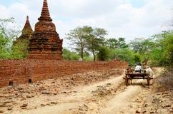 Carretto di guida della mucca della gente birmana Fotografia Stock Libera da Diritti