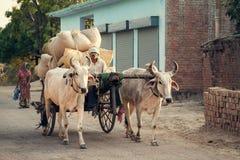 Carretto di manzo indiano o carretto del bue Fotografia Stock