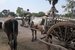 Carretto rurale e agricoltore del bue di scena che aspettano dal bordo della strada fotografie stock libere da diritti