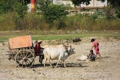 Carretto su una riva del fiume, Mingun, regione di Mandalay, Myanma del bue fotografia stock