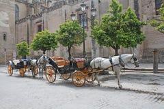 Carri trainati da cavalli Fotografia Stock
