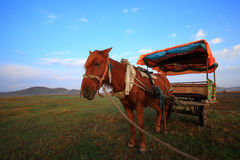 Carriage. A horse carriage for tourists, with the blue sky and white clouds, the grasses on the ground, present a pleasant picture royalty free stock photography