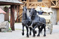 A carriage with black horses Royalty Free Stock Image