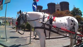 Carriage at Castel Nuovo stock video