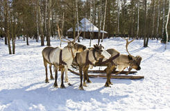 Carriage with deers Royalty Free Stock Photography