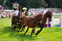 Carriage drive show. In strzegom at HSBC FEI World Cup 2009 Royalty Free Stock Image