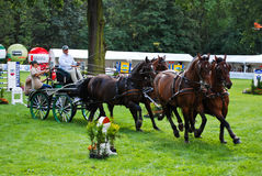 Carriage drive show. In strzegom at HSBC FEI World Cup 2009 Stock Images