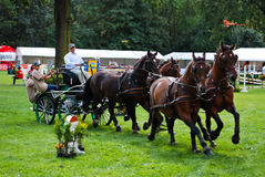 Carriage drive show. In strzegom at HSBC FEI World Cup 2009 Royalty Free Stock Photos