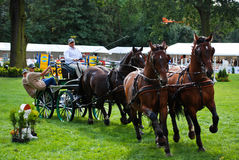 Carriage drive show. In strzegom at HSBC FEI World Cup 2009 Stock Photography